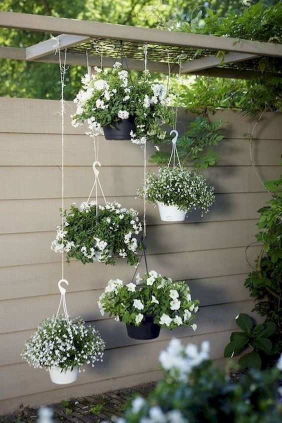 Backyard Flowers Ideas: Captivating White