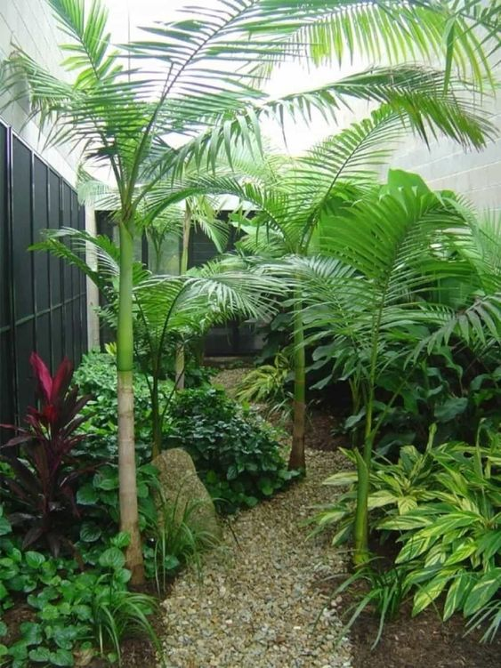 Tropical Backyard Ideas: Simply Fresh Backyard