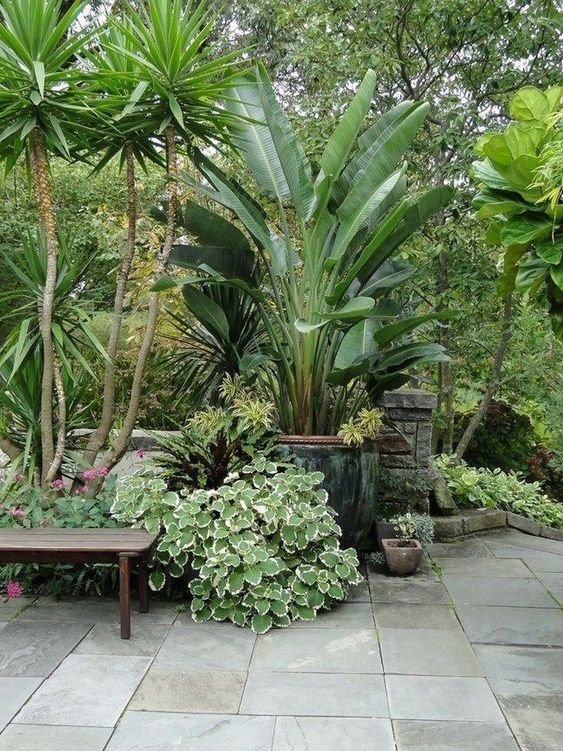 Mesmerizing Tropical Backyard Ideas to Freshen Your ... on Tropical Backyard  id=63776