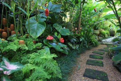 tropical backyard ideas 21