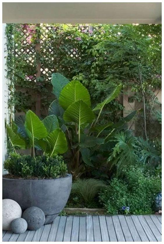 tropical backyard ideas 9