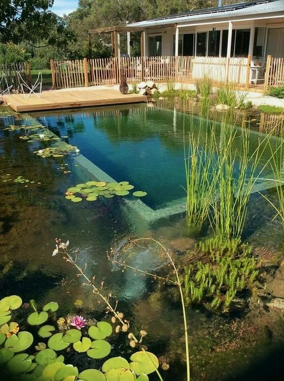 Natural Swimming Pool Ideas: Stunning Decoration
