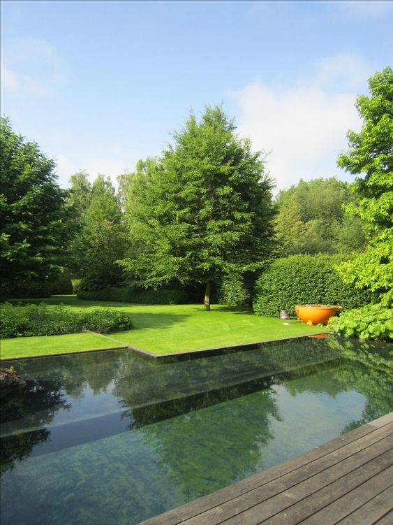 Natural Swimming Pool Ideas: Modern Natural Pool