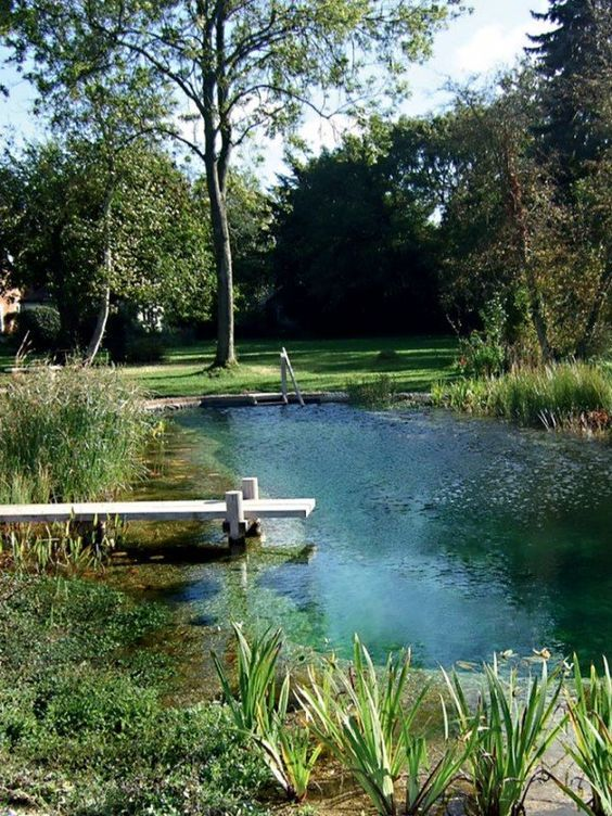Natural Swimming Pool Ideas: Simple Green Pool