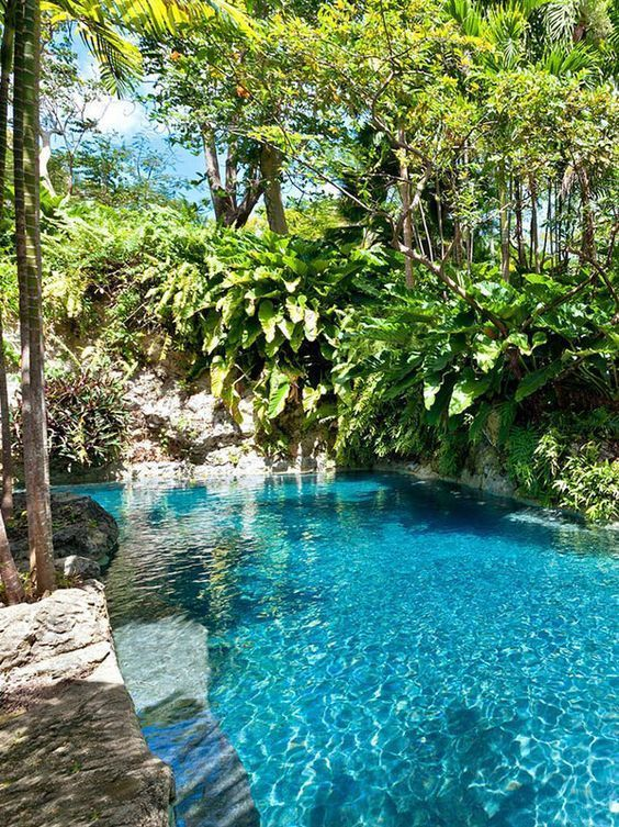 Swimming Pool Garden Ideas: Fresh Tropical Pool
