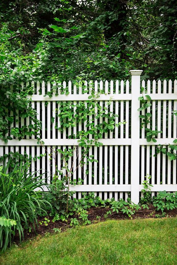 Fence Ideas: Tall Picket Fence