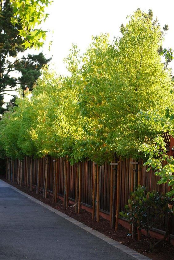 Wooden Fence Ideas: Stunning Living Fence