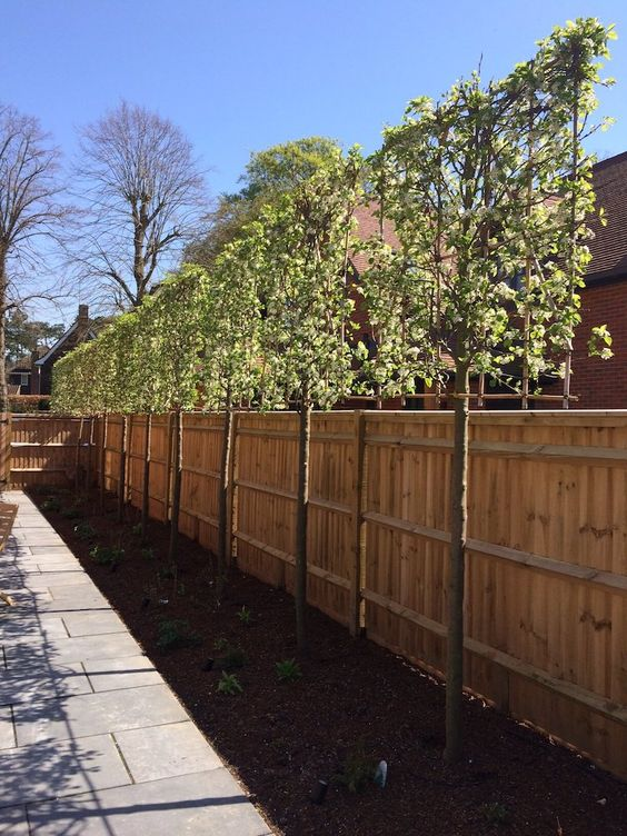Fence Design Ideas: Simple Wood Fence