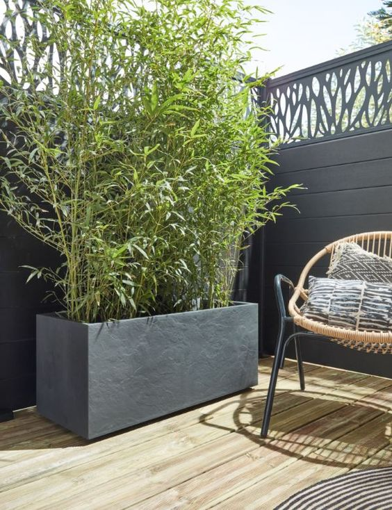 Fence Design Ideas: Chic and Bold