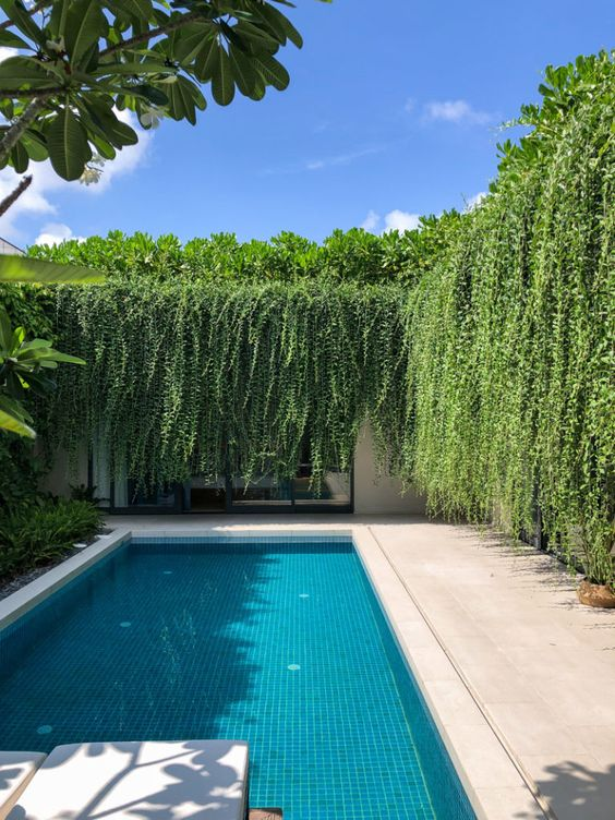 wimming Pool Landscaping Ideas: Captivating Hanging Garden