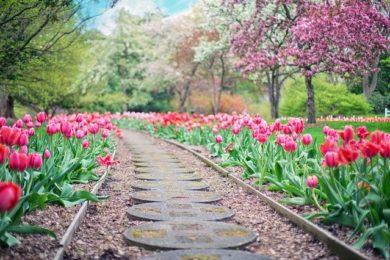 Fresh Garden Ideas For The Springtime