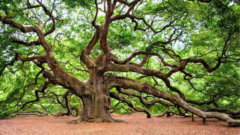 The True Benefits of Oak for Your Building and Property